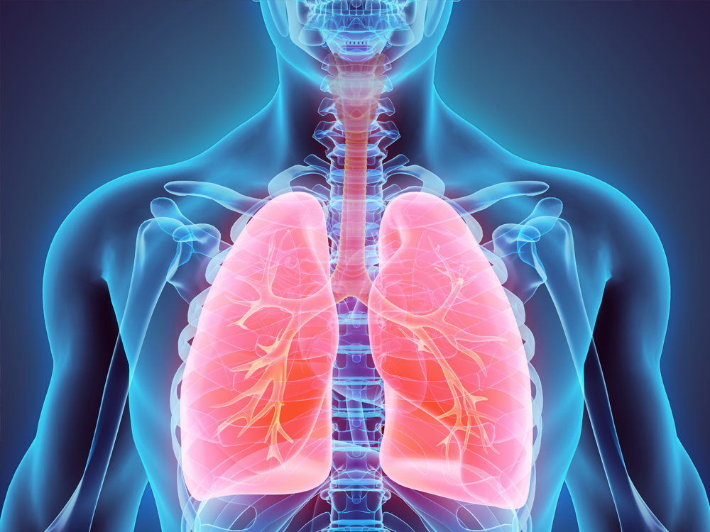 Aging Studies in the Pulmonary System (R01)